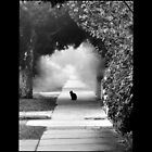 black cat by Bianca Turner