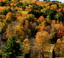 Maple tree colors, Fall in New England Sticker