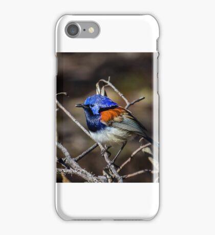 Blue-Breasted Fairy Wren iPhone Case/Skin