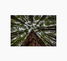 Looking Up at Redwood Forest, East Warburton Unisex T-Shirt