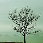 Just a little tree by Agnes McGuinness