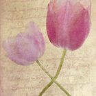 Tulip Twist by DIANE  FIFIELD