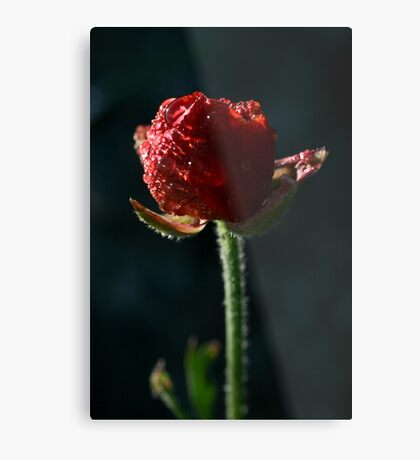 Spring time bloom, with lighting affects  Metal Print