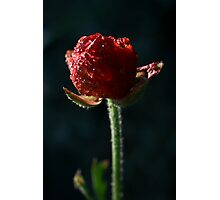 Spring time bloom, with lighting affects  Photographic Print