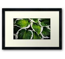 Garden Collection - Hosta Framed Print