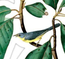 Bonaparte's Flycatcher Sticker