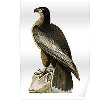 Bird of Washington Poster
