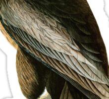 Bird of Washington Sticker