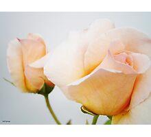 Pastel Roses Photographic Print