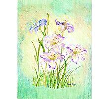 Carmen Renee Day Lilies Photographic Print