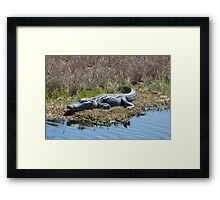 Smiling Gator Framed Print