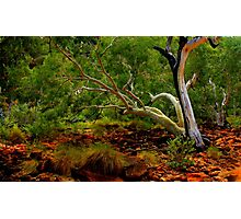 Ghost Gum in the Red Centre Photographic Print