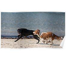 Black dog wins! Poster