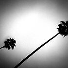 Palms Noir by Laurie Allee