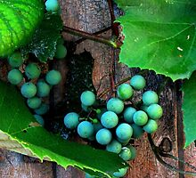 Grapes On The Vine by AngieDavies