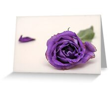 Cutout of a Purple rose on white background Greeting Card
