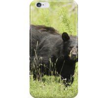 Black bear in a green field iPhone Case/Skin