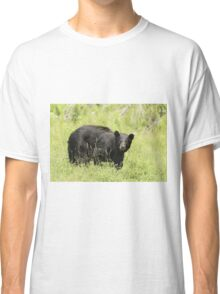 Black bear in a green field Classic T-Shirt