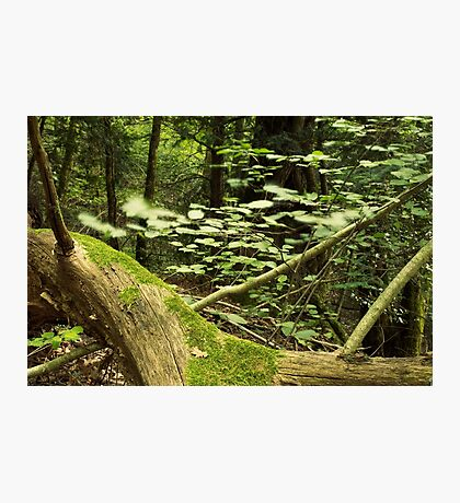 Like a little breath in the forest Photographic Print
