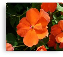 Vivid Orange Vermillion Impatiens Flower Canvas Print