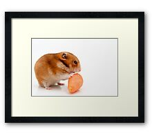Cutout of a curious hamster and a carrot on white background Framed Print