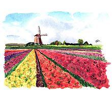Holland flowers Photographic Print