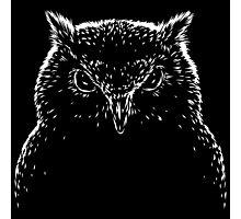 Black and white owl bird Photographic Print
