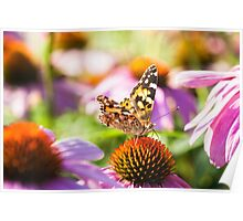 Painted Lady On A Flowerbed Poster
