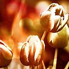 *Abstract Tulips* by DeeZ (D L Honeycutt)
