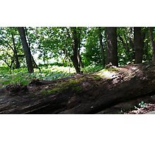 Raisbeck Park #3 Photographic Print