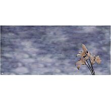 Day Lily Against a Painted Sky Photographic Print