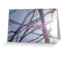 Sunshine and Willow  Greeting Card