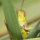 """"""" Inquisitive Hopper """" by Richard Couchman"""