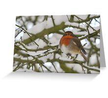 Robin in winter landscape Greeting Card
