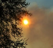 Sun and Fire in the Everglades by Gilda Axelrod