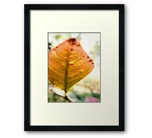 Blueberry Leaf in the Autumn Framed Print