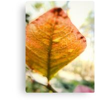 Blueberry Leaf in the Autumn Canvas Print