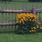 Along the Fence by Christine Wilson