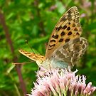Butterfly on Pink Flower by Christine Wilson