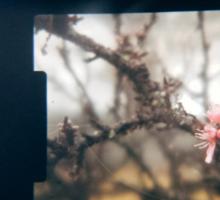 Through the viewfinder - winter blossoms Sticker
