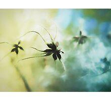 Alien Flower Photographic Print
