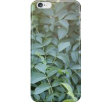Plant in sunlight iPhone Case/Skin