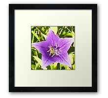 beautiful,digital photo of Gentian blue,wild flower,Wasp,insect Framed Print
