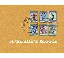 A Giraffe's Moods Photographic Print