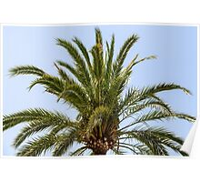 Green Palm Tree On Blue Sky Poster
