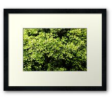 Green Tree Foliage In Spring Framed Print