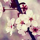 Sweet Spring by LawsonImages