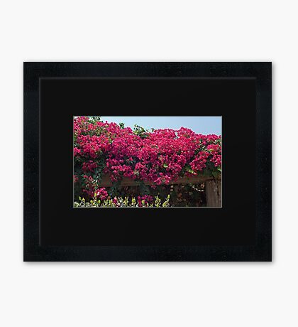 Flowers and a Trellis Framed Print