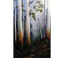 Gumtrees After The Rain Photographic Print