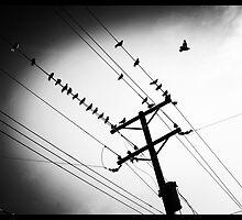 TheBirds by alanrubio715